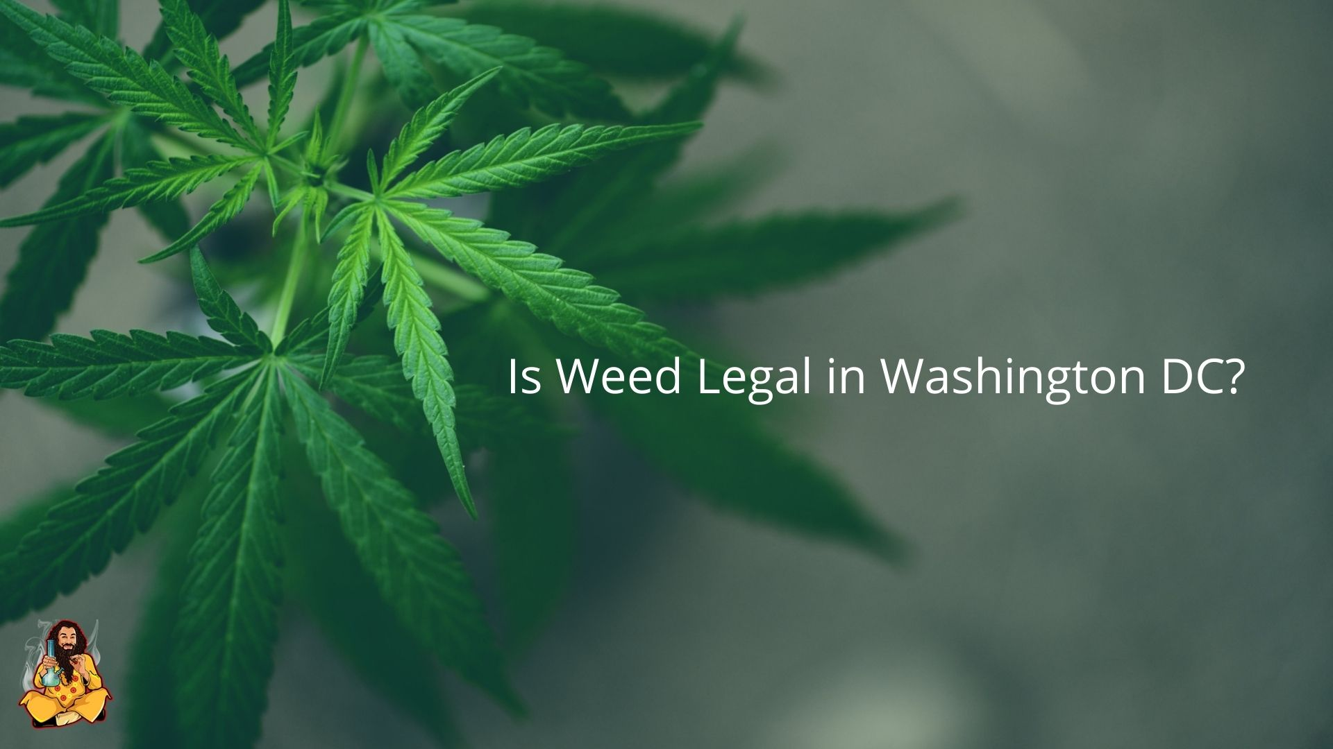 Is Weed Legal in DC?