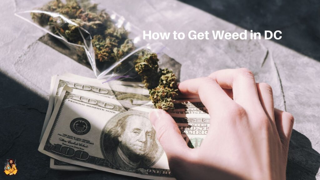 Getting Weed in D.C.